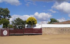 Plaza de tientas